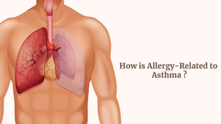 How is allergy-related to asthma?