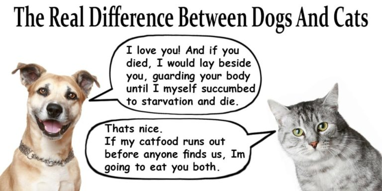 Main Differences Between Dogs and Cats