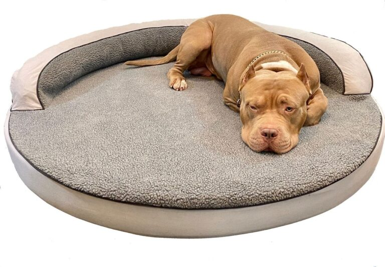 Best Dog Beds in the Market: Which are they?